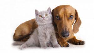amici-zampe-animali-pet-pets-dog-dogs-cat-cats-friends